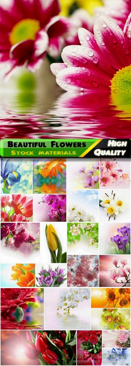 Set of beautiful macro Flowers stock images - 25 HQ Jpg