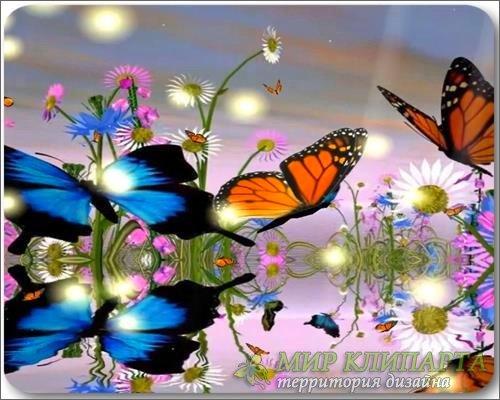 Бабочки - Видео обои для рабочего стола