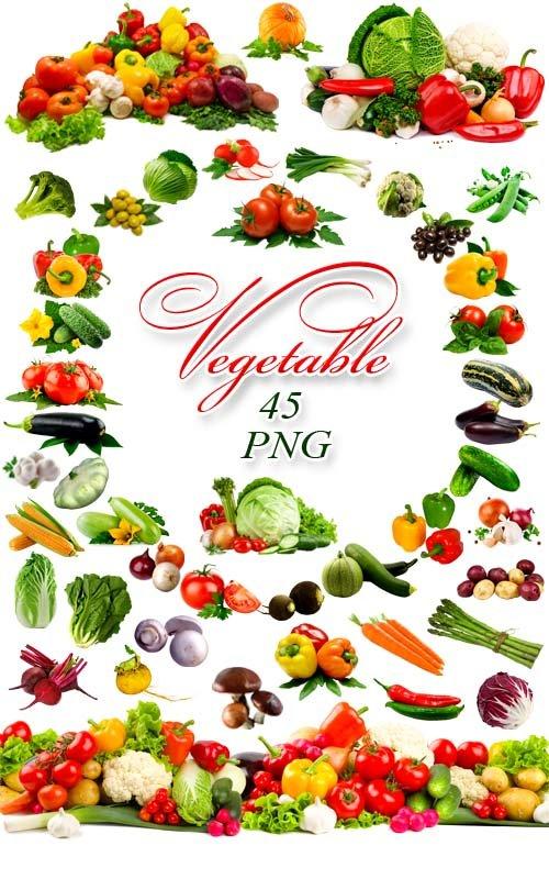 Овощи - Клипарт на прозрачном фоне / Vegetables
