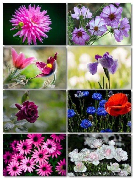 Коллекция прекрасных фото цветов для рабочего стола выпуск 37