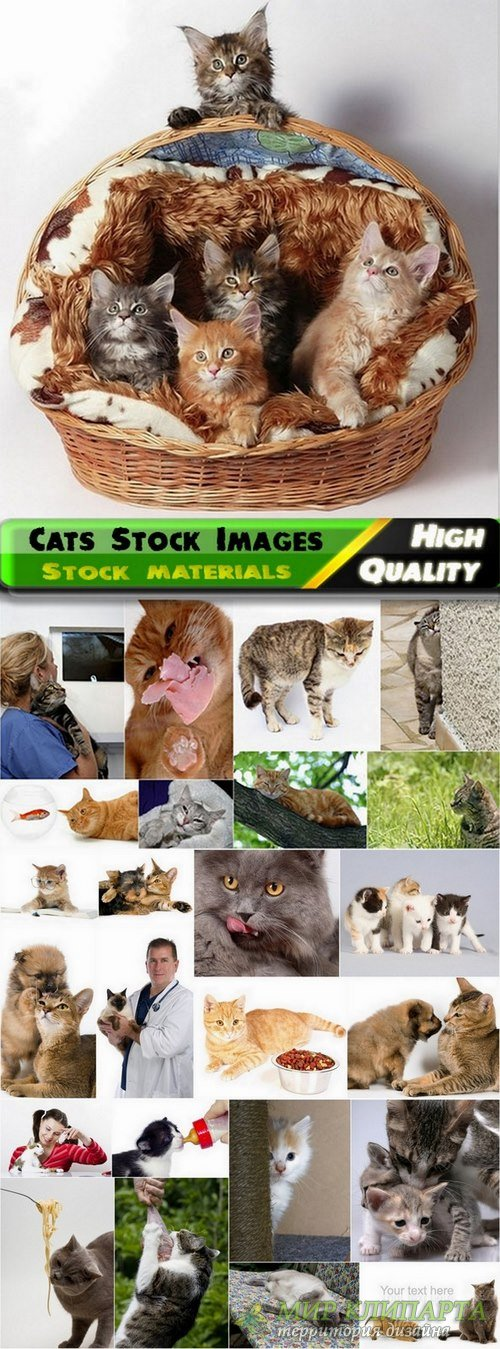 Cats Stock Images - 25 HQ Jpg