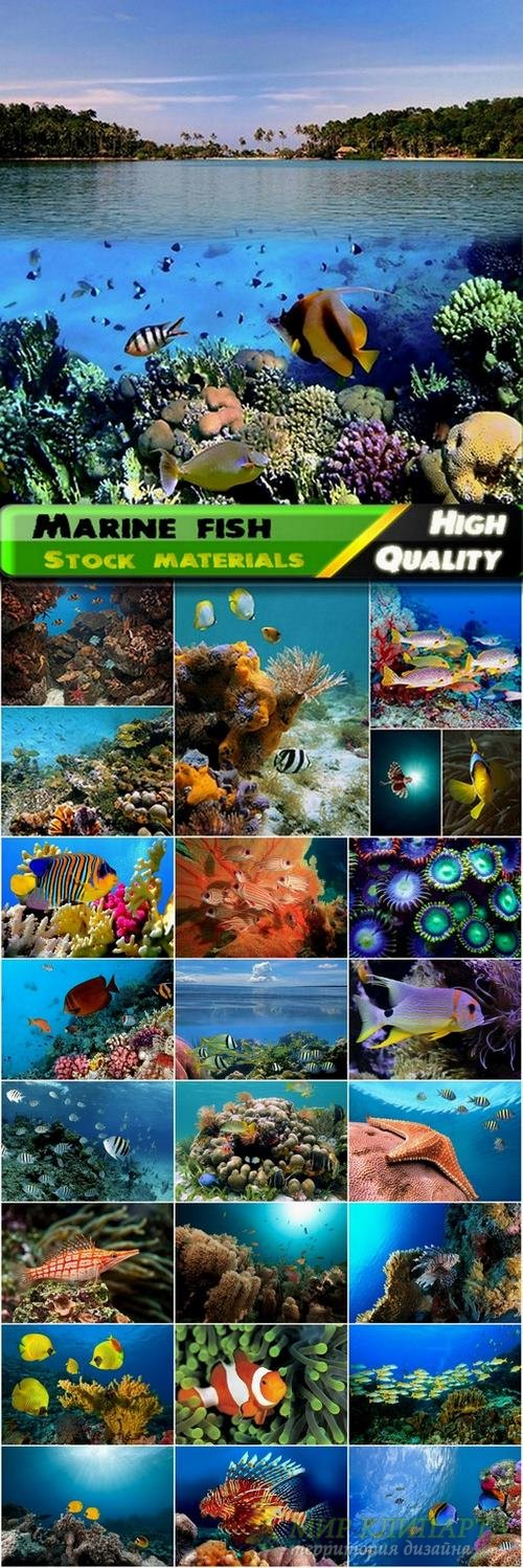Marine fish Stock images - 25 HQ Jpg