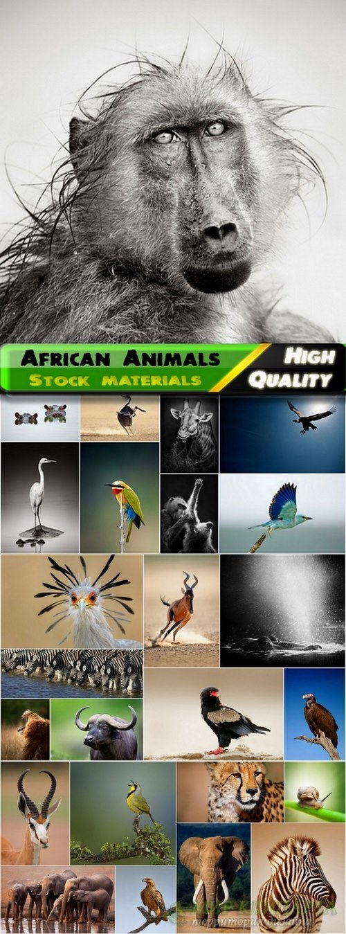 Amazing African Animals Stock Images #3 - 25 HQ Jpg