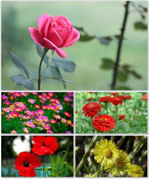 Цветы в сборнике обоев для рабочего стола 55