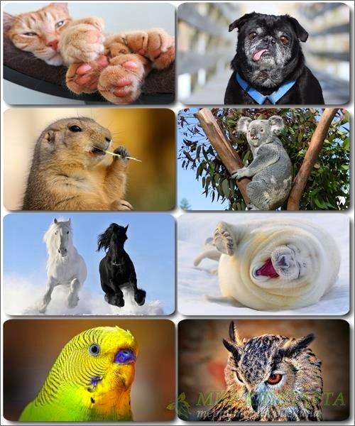 Забавные животные - Коллекция фото обоев (часть 31)