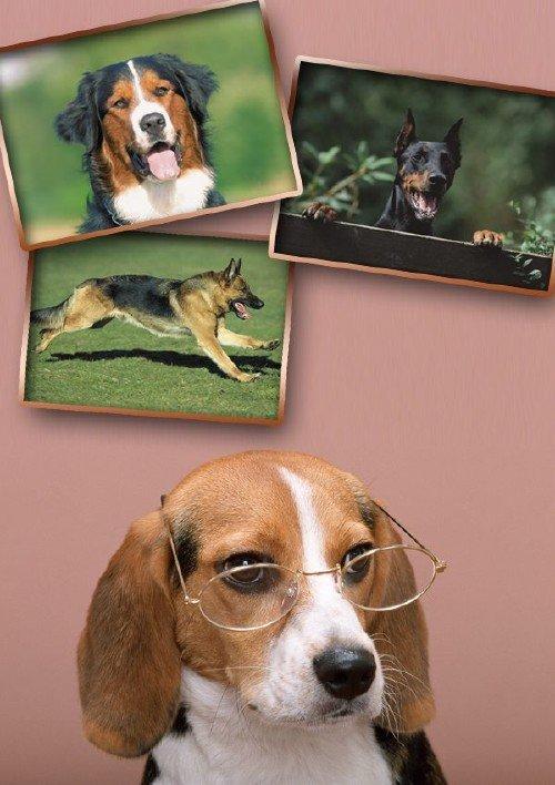Собака (подборка изображений)