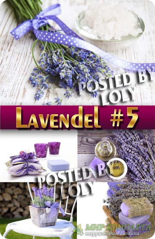 Цветы Лаванды #5 - Растровый клипарт