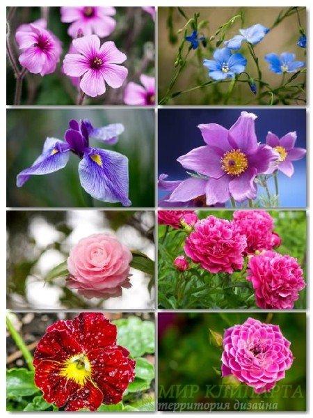 Коллекция прекрасных фото цветов для рабочего стола выпуск 38