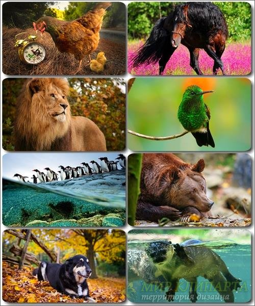 Забавные животные - Коллекция фото обоев (часть 32)