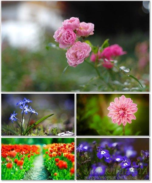 Цветы в сборнике обоев для рабочего стола 57