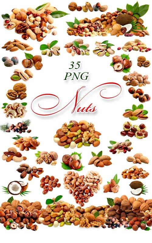 Орехи на прозрачном фоне - Растровый клипарт / Nuts