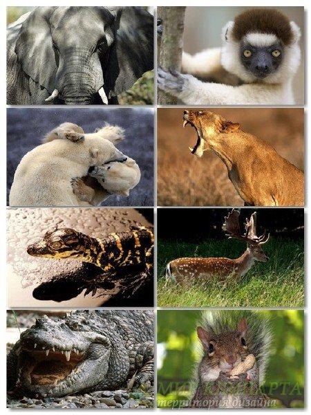Подборка хорошего качества животных в фото на рабочий стол выпуск 75