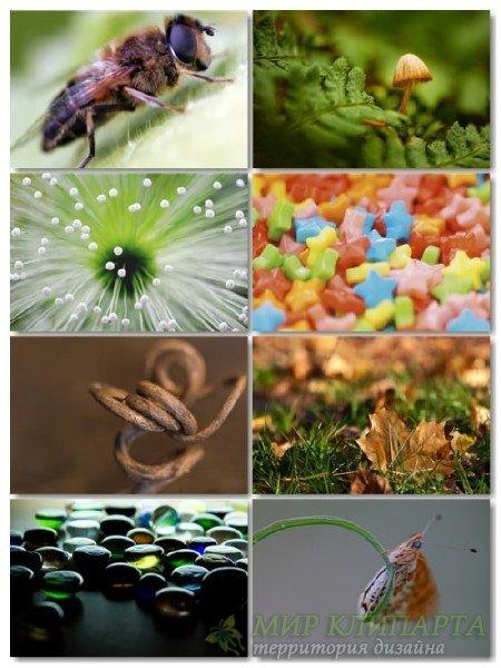 Сборник фото макросъемки для рабочего стола выпуск 14