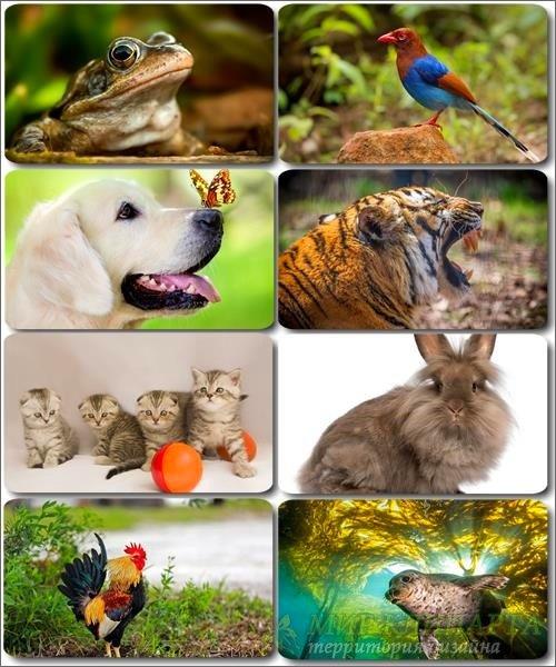 Забавные животные - Коллекция фото обоев (часть 33)