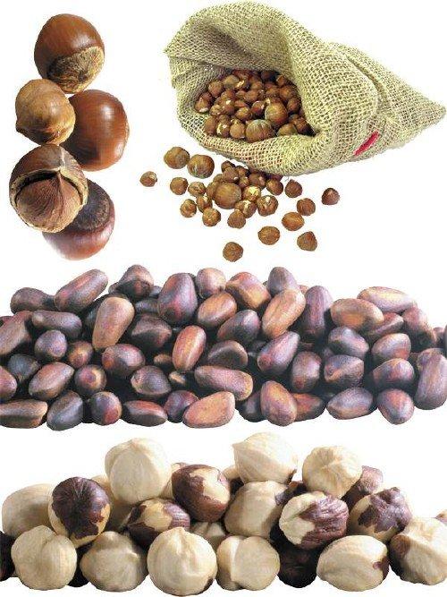 Лесной орех, фундук, кедровый орех (подборка изображений)