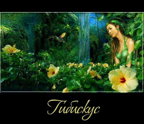 Гибискус - цветы на прозрачном фоне