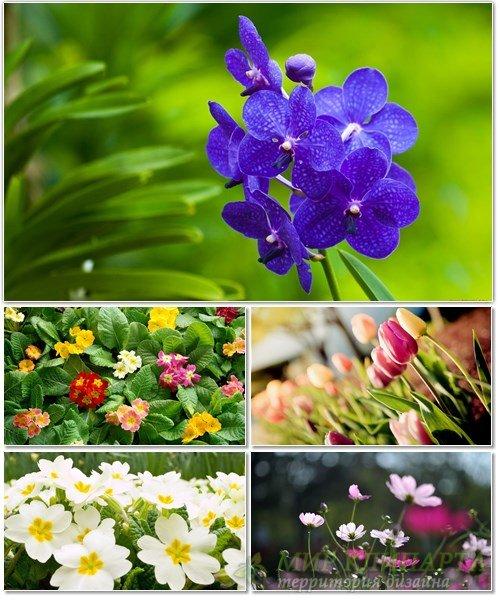 Цветы в сборнике обоев для рабочего стола 59