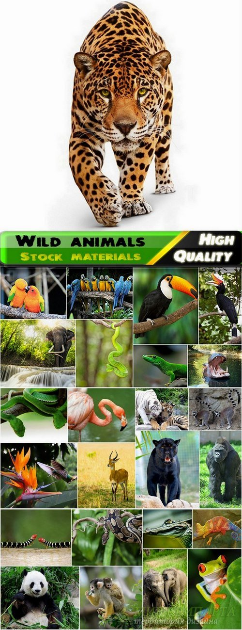 Wild animals in the jungle Stock images - 25 HQ jpg