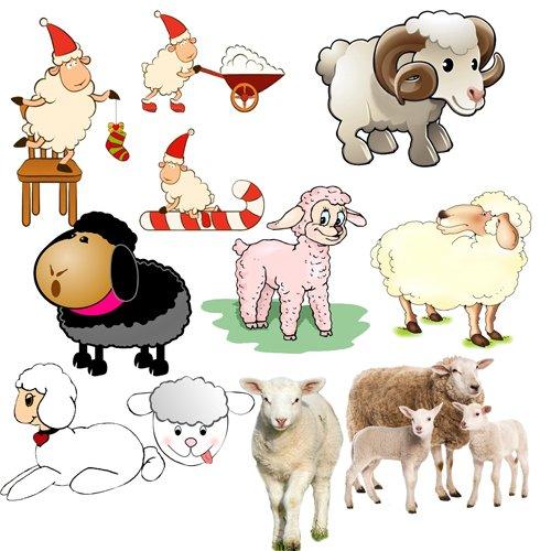 Клипарт ''Весёлые овечки ''