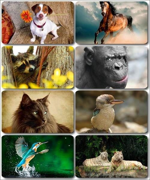 Забавные животные - Коллекция фото обоев (часть 35)