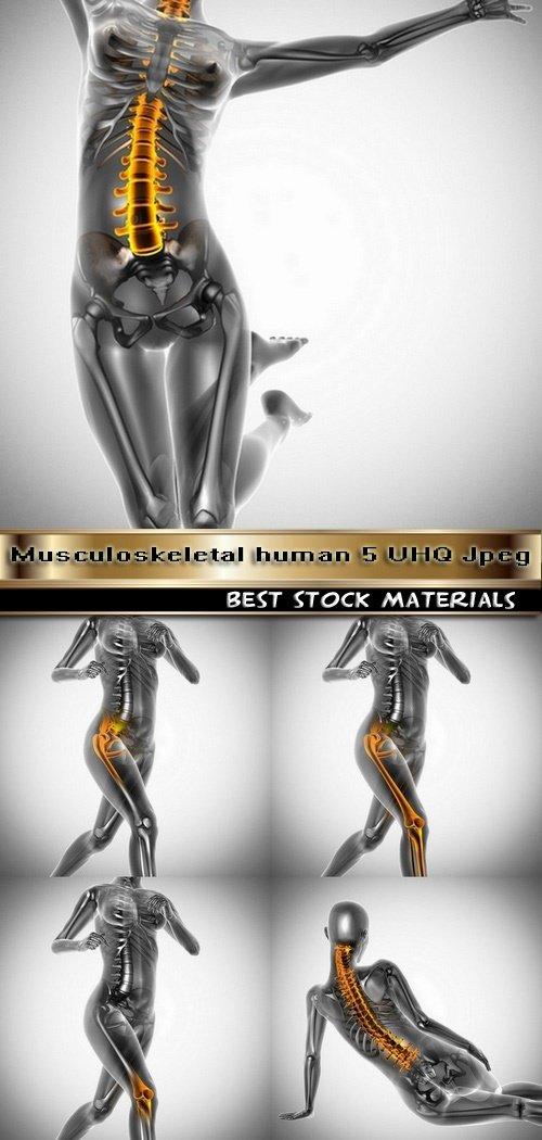 Musculoskeletal human 5 UHQ Jpeg