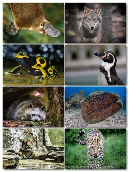 Подборка хорошего качества животных в фото на рабочий стол выпуск 77