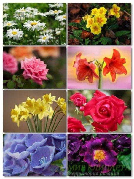 Коллекция прекрасных фото цветов для рабочего стола выпуск 42