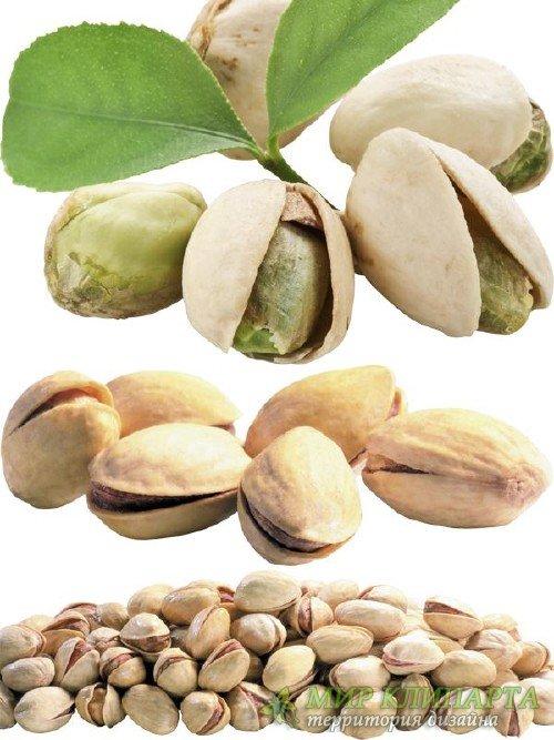 Орехи: Фисташки (подборка изображений)