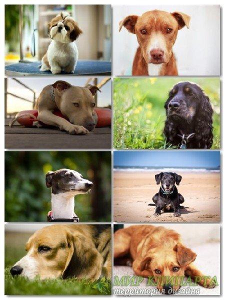 Подборка фото разных пород собак отличного качества выпуск 1