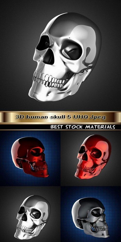 3D human skull 5 UHQ Jpeg