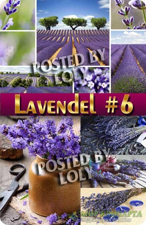 Цветы Лаванды #6 - Растровый клипарт