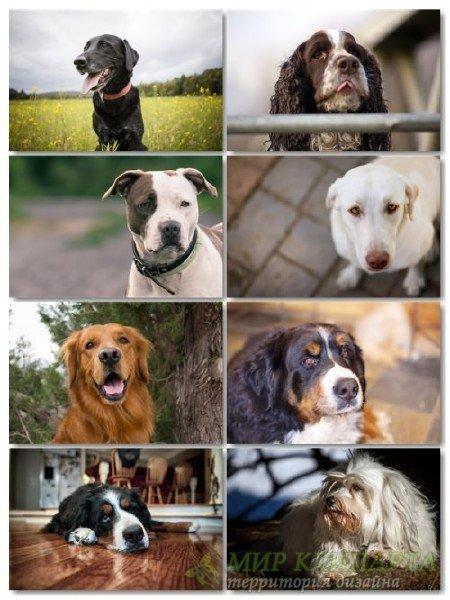 Подборка фото разных пород собак отличного качества выпуск 2