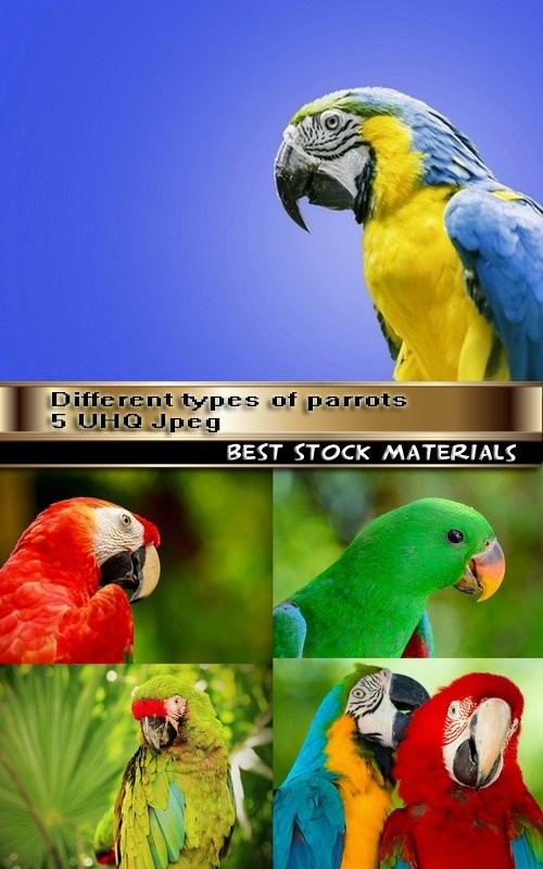 Different types of parrots 5 UHQ Jpeg