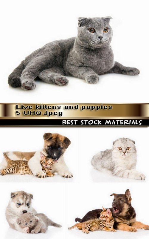 Live kittens and puppies 5 UHQ Jpeg