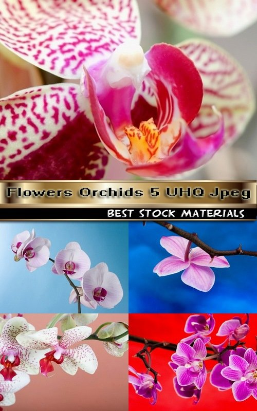Flowers Orchids 5 UHQ Jpeg