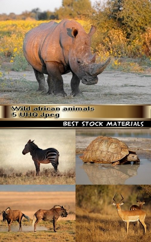 Wild african animals 5 UHQ Jpeg