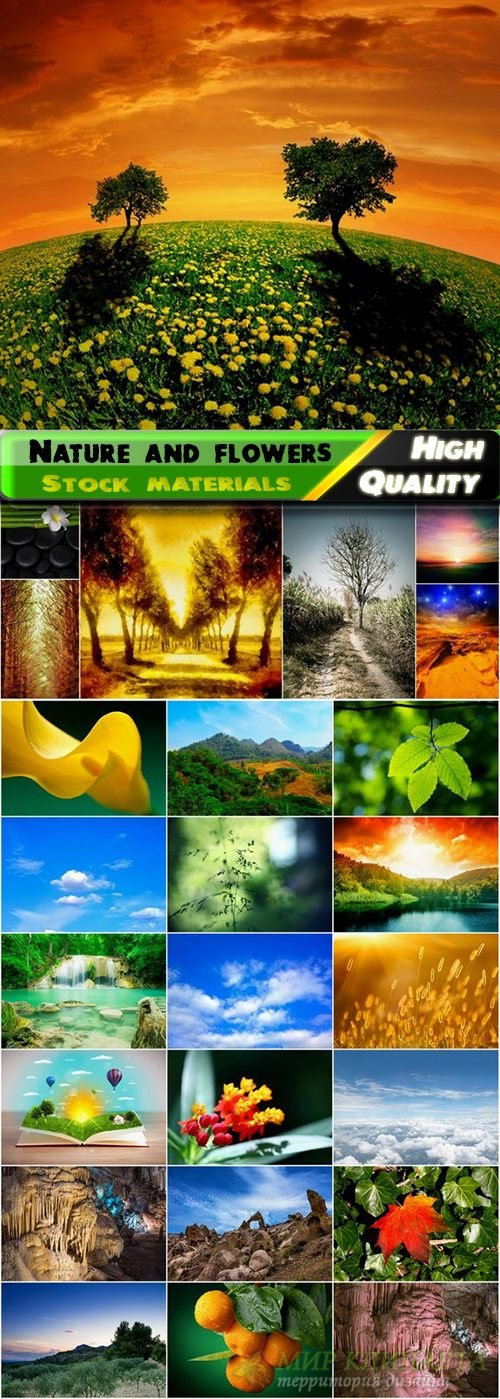 Amazing Nature and flowers Stock images - 25 HQ Jpg