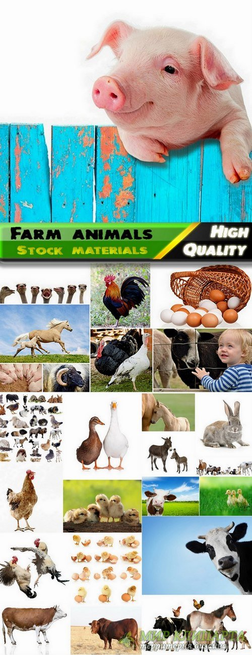 Farm animals and livestock Stock images - 25 HQ Jpg