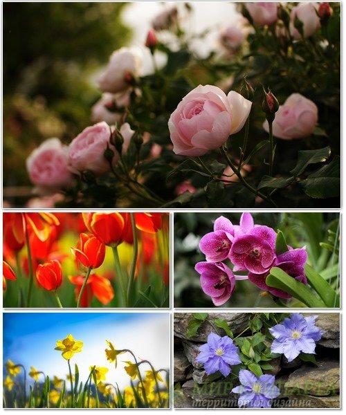 Цветы в сборнике обоев для рабочего стола 62
