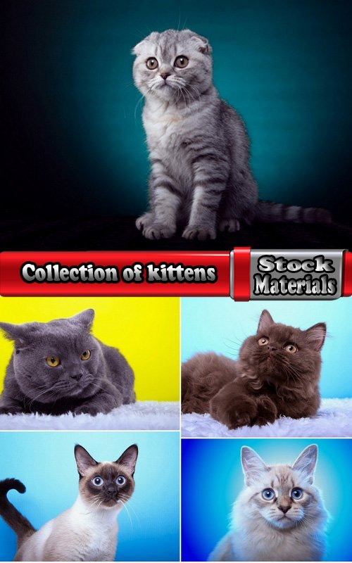 Collection of kittens of different breeds 5 UHQ Jpeg