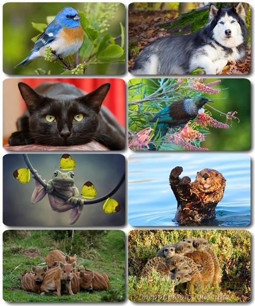 Забавные животные - Коллекция фото обоев (часть 37)