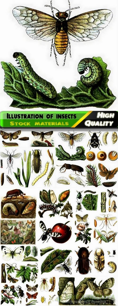 Beautiful vector illustration of insects from stock - 25 Eps