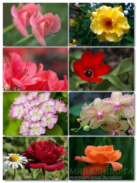 Коллекция прекрасных фото цветов для рабочего стола выпуск 45