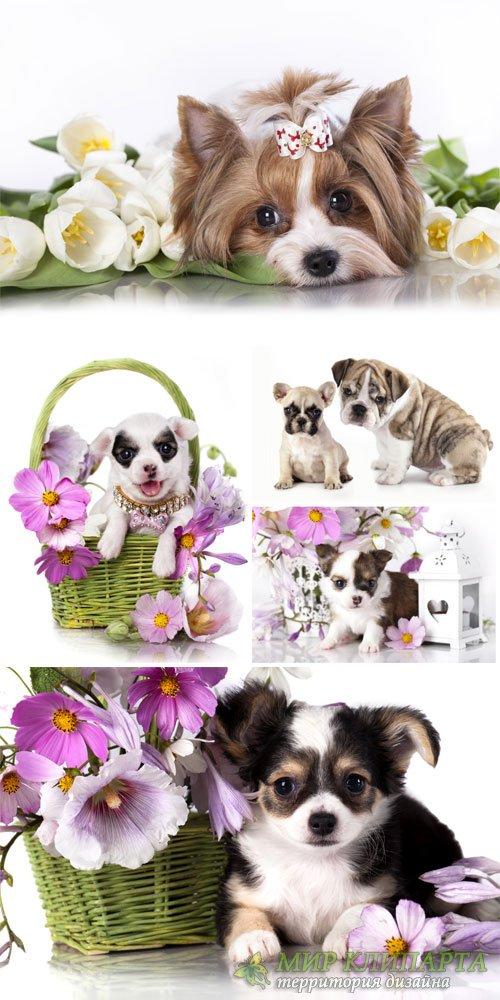 Маленькие породистые щенки с цветами / Small purebred puppies with flowers  ...