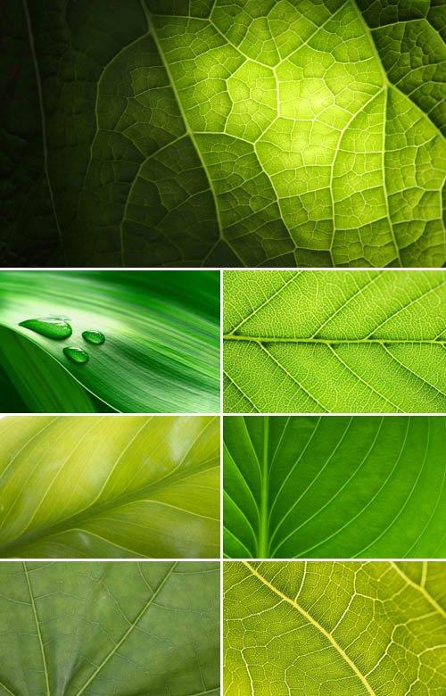 Зеленый лист (коллекция макро фонов)