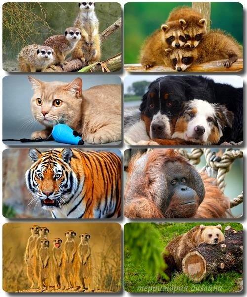 Забавные животные - Коллекция фото обоев (часть 39)