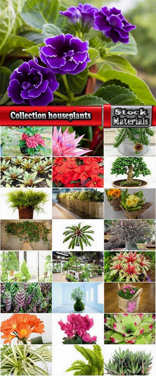 Collection houseplants 25 UHQ Jpeg