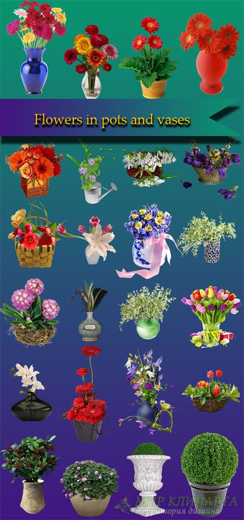 Flowers in pots and vases