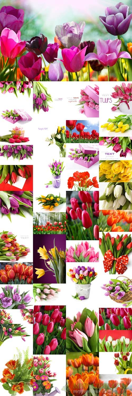 Stock photo Amazing tulips