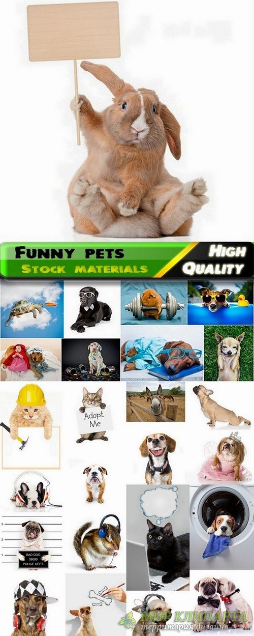 Cute and funny home pets Stock images - 25 HQ Jpg
